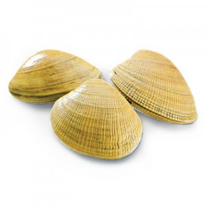 Shellfish Image